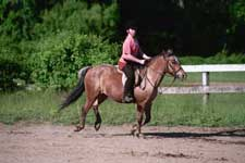 pony cantering