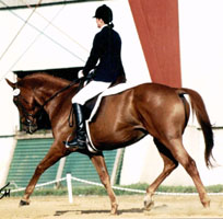 Louise showing at a dressage show